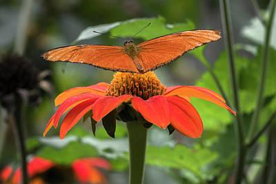 Photograph - Julia Butterfly Jardin Botanico Del Quindio Calarca Colombia by Adam Rainoff