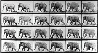 Photograph - Jumbo Jogger by Eadweard Muybridge