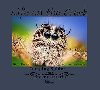 Digital Art - Jumping Spider Colonus Hesperus by Lisa Redfern