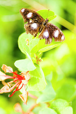 Photograph - Jungle Bug by Jorgo Photography - Wall Art Gallery