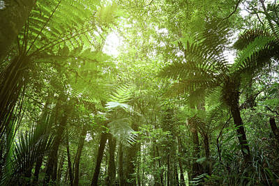 Photograph - Jungle Fern Trees by Les Cunliffe