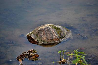 Wall Art - Photograph - Jungle Garden Turtle by Carolyn Hebert