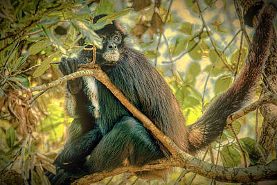 Photograph - Jungle Howler by Max Huber