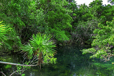 Photograph - Jungle Of Xel-ha by Sun Travels