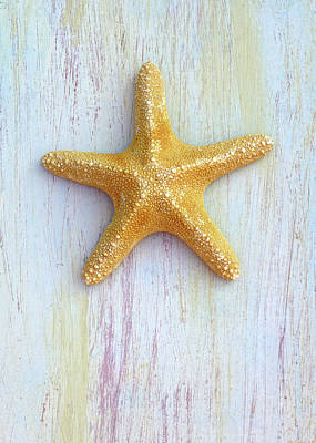 Photograph - Jungle Sea Star by Kathi Mirto