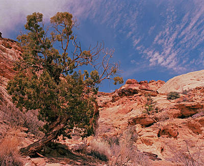 Photograph - Juniper And Clouds by Tom Daniel