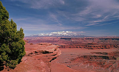 Photograph - Juniper At Dead Horse Point by Tom Daniel