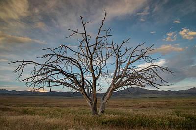Photograph - Juniper by Kent Keller