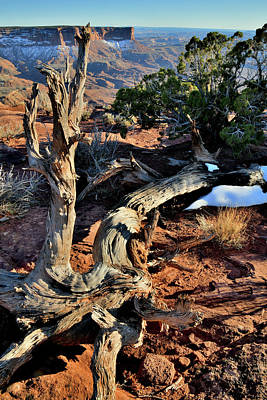 Photograph - Juniper On The Edge Of Green River Overlook by Ray Mathis