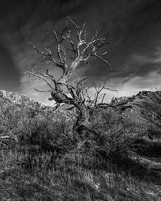 Photograph - Juniper Requiem by Lon Dittrick
