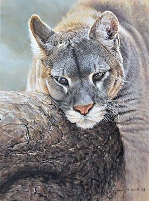 Painting - Just Chillin - Cougar By Alan M Hunt by Alan M Hunt