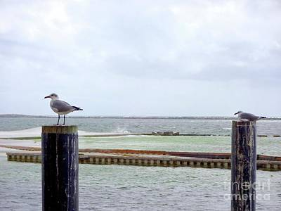 Sea Wall Art - Photograph - Just Chillin' by Megan Cohen