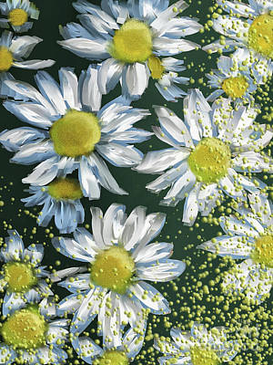 Digital Art - Just Crazy For Daisies by Lois Bryan