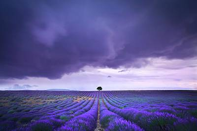 Photograph - Just One - Valensole by Contact Me At Jgdamlow@gmail.com