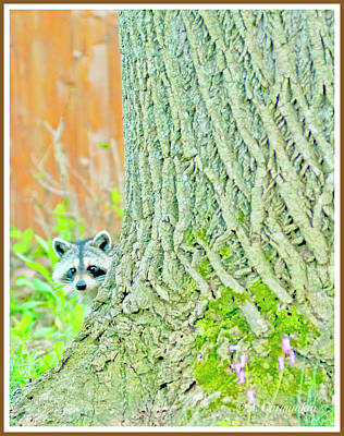 Photograph - Juvenile Raccoon Peeks Out From Behind A Tree by A Gurmankin