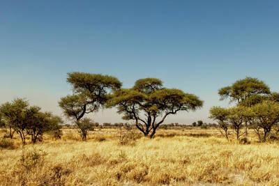 Photograph - Kalahari Landscape by Kay Brewer