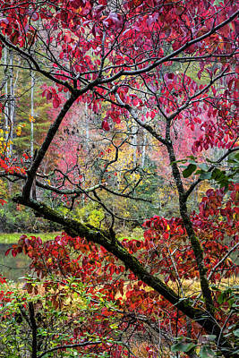 Photograph - Kaleidoscope Of Fall Colors by Debra and Dave Vanderlaan