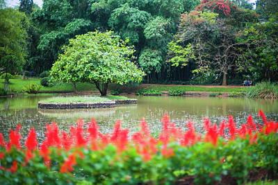Botanical Photograph - Kandy Royal Botanical Gardens At by Matthew Williams-ellis / Robertharding