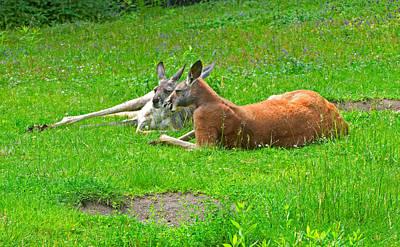 Photograph - Kangaroo Two by Paul Mangold