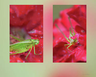 Photograph - Katydid In The Rain by Karen Rispin