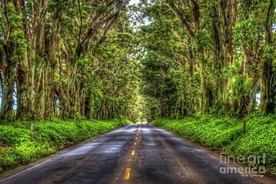 Photograph - Kauai Eucalyptus Tree Tunnel Hawaii Art by Reid Callaway