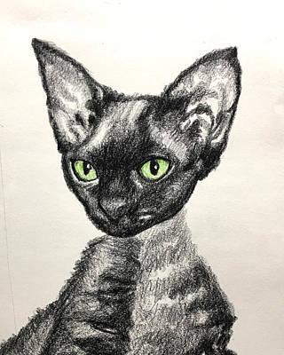 Drawing - KC the Cat by Robert Korhonen