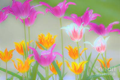 Photograph - Kentucky Tulips by Merle Grenz