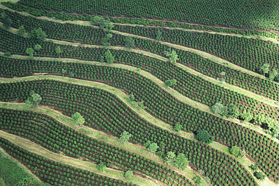 Photograph - Kenya, Coffee Plantations, Aerial View by Philippe Bourseiller