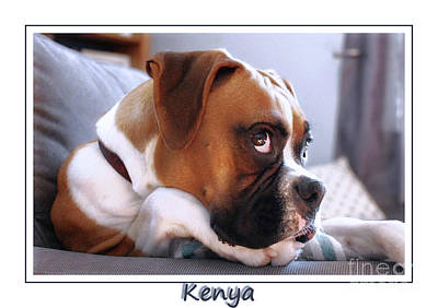 Photograph - Kenya My Boxer Pup by Elaine Manley