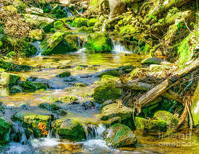 Photograph - Keown Fallstrail by Nick Zelinsky