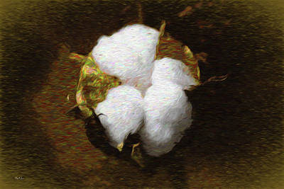 Digital Art - King Cotton by Barry Jones