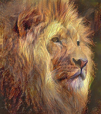 Photograph - King Of The Jungle by HH Photography of Florida