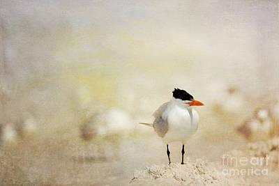 Photograph - King Of The Sand Pile by Beve Brown-Clark Photography