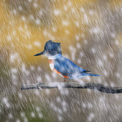 Digital Art - Kingfisher In Autumn Snow by Mark Miller