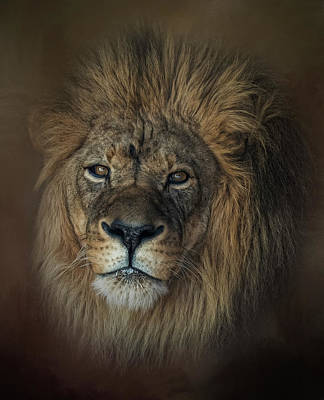 Photograph - King's Gaze by Kelley Parker