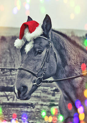 Photograph - Kirby's Holiday Wish by JAMART Photography