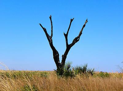 Moody Trees - Kissimmee Prairie Lone Tree by Chris Mercer