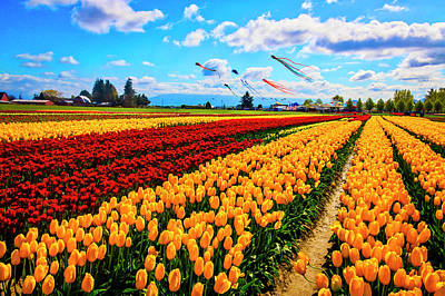 Photograph - Kites Over Tulip Field by Garry Gay
