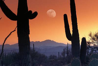 Photograph - Kitt Peak Under Moon From Saguaro by Tim Fitzharris/ Minden Pictures
