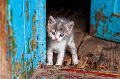 Photograph - Kitten and blue door by Valerie Lazareva