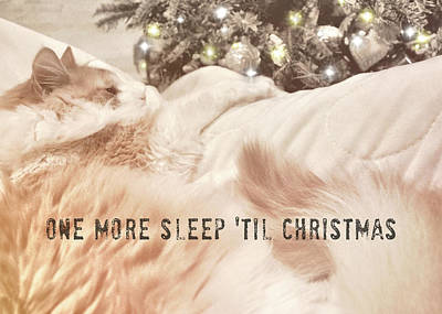 Photograph - Kitten Dreaming Quote  by JAMART Photography