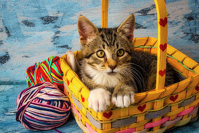 Photograph - Kitten In Yellow Basket With Yarn by Garry Gay