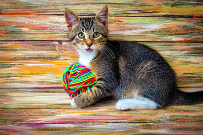 Photograph - Kitten Playing With Yarn by Garry Gay