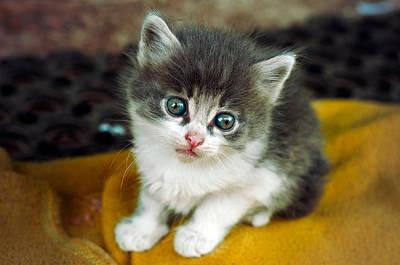 Photograph - Kitten  by Valerie Lazareva