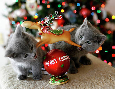 Photograph - Kittens And Reindeer by Marilyn Hunt