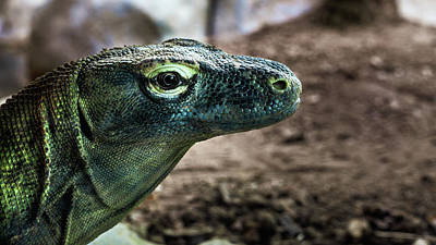 Photograph - Komodo Dragon by Jeanette Fellows