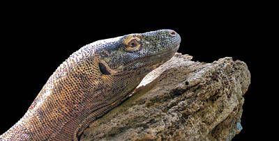 Photograph - Komodo Dragon by Philip Rispin