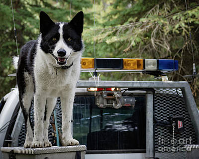 Photograph - Kuma by Brad Allen Fine Art