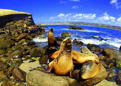 Photograph -  La Jolla Sea Lions  by Todd Hummel