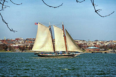 Photograph - Lady Maryland In Baltimore Harbor by Bill Swartwout Photography